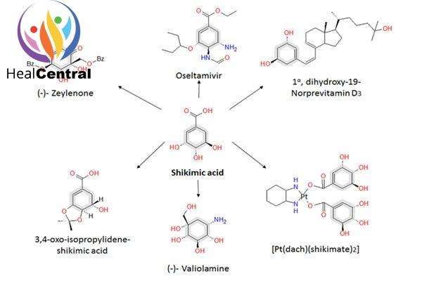 Các con đường tổng hợp từ acid shikimic