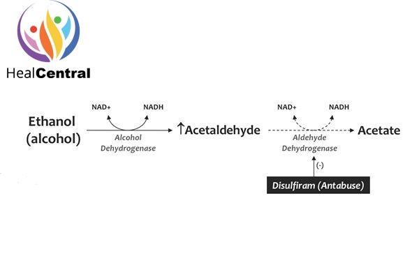 Vị trí ức chế của disulfiram