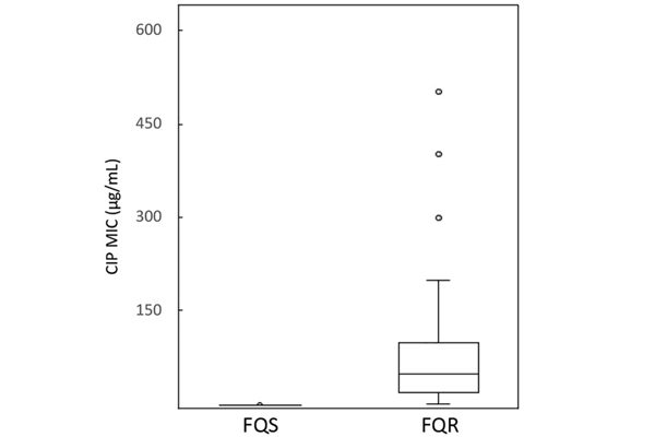 Các MIC của ciprofloxacin với E.coli được phân lập lâm sàng