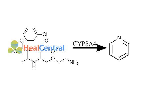 Chuyển hóa amlodipine thành pyridin