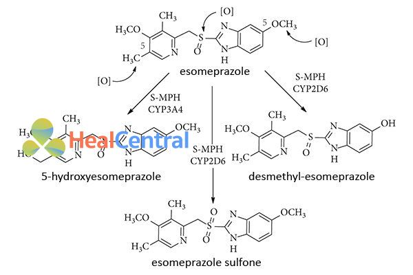 Chuyển hóa tại gan của Esomeprazole