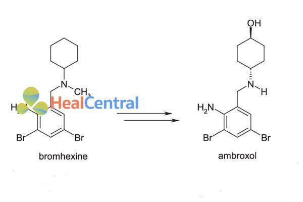 Chuyển hóa từ bromhexine thành ambroxol.