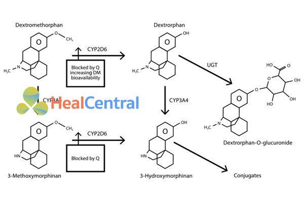 Con đường chuyển hóa dextromethorphan.