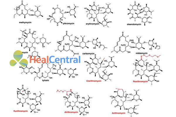 Erythromycin và một số macrolide khác