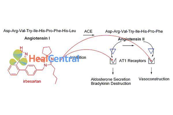 Irbesartan ức chế thụ thể AT1.