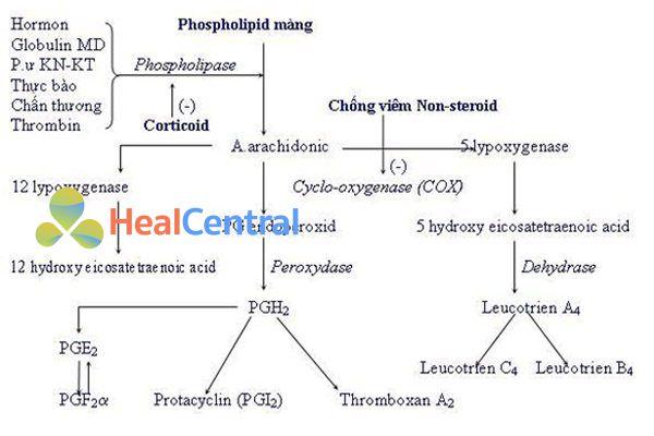 Sinh lý quá trình viêm và vị trí tác dụng của NSAIDs.