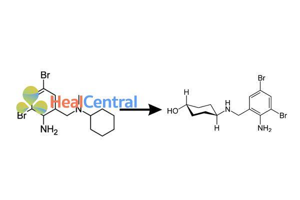 Chuyển hóa Bromhexine thành Ambroxol