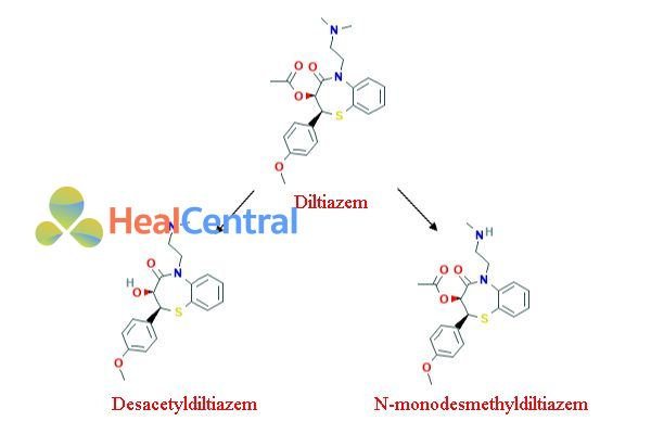 Chuyển hóa Diltiazem