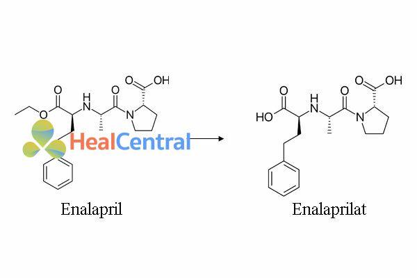 Chuyển hóa enalapril