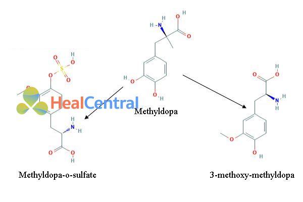Chuyển hóa Methyldopa