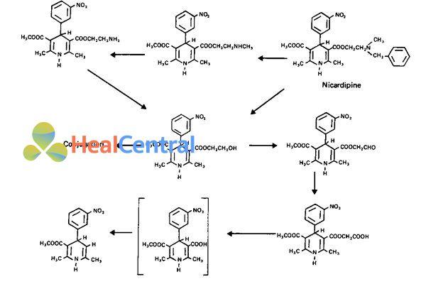 Chuyển hóa Nicardipine