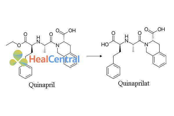Chuyển hóa Quinapril