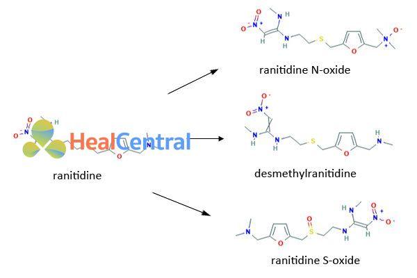 Chuyển hóa của Ranitidine