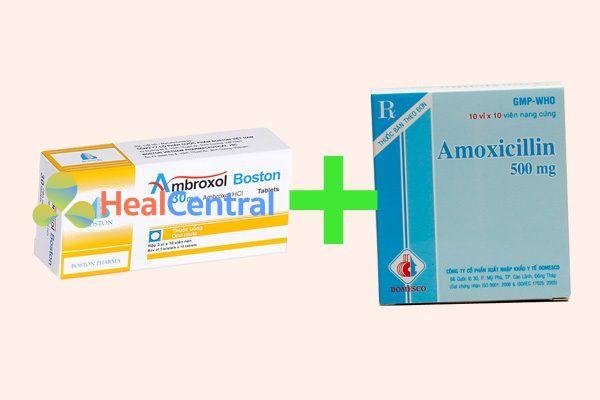 Phối hợp ambroxol và amoxicillin