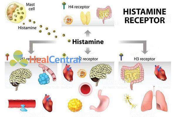 Recepter của Histamin