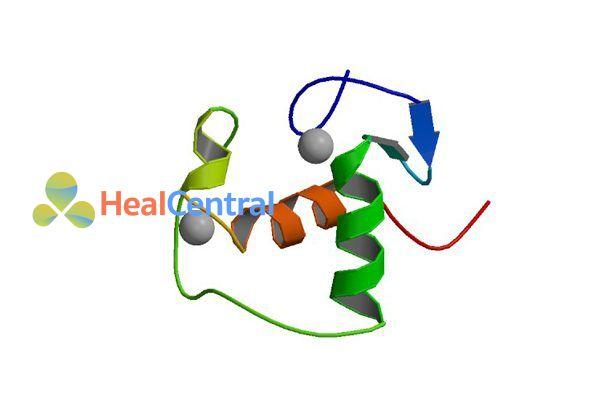 Receptor Mineralocorticoid