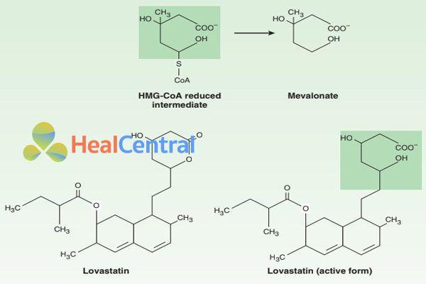 Phần cấu trúc tương tự giữa lovastatin ( dạng hoạt động) và HMG-CoA