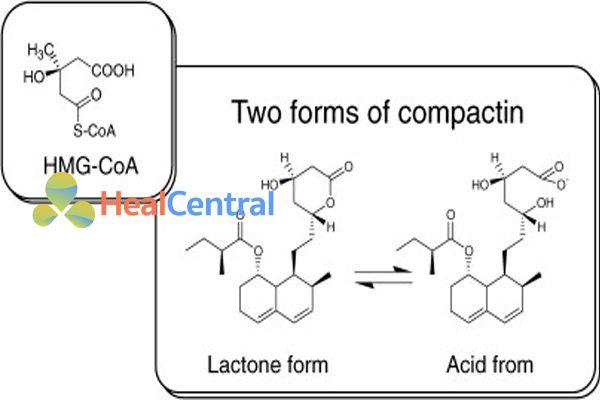 Sự tương đồng về cấu trúc giữa compactin và HMG-CoA
