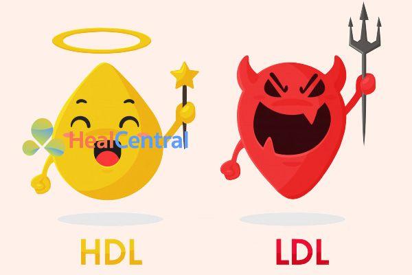 Cholesterol xấu ( LDL) và Cholesterol tốt (HDL)