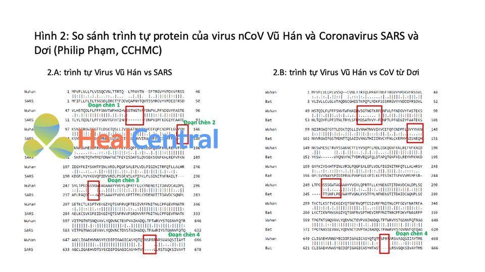 Hình 2: So Sánh trình tự Protein của virus nCoV Vũ Hán và Coronavirus SARS và Dơi (Philip Phạm, CCHMC).