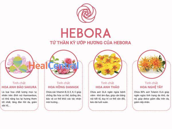 Các thành phần chính có trong viên uống Hebora