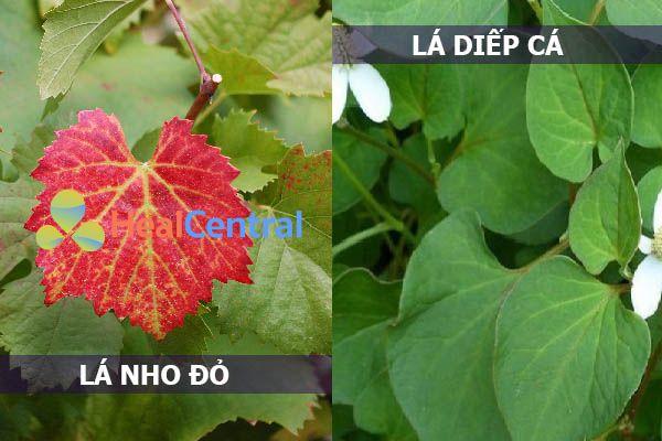 Các thành phần có nguồn gốc thảo dược trong viên uống Trilado