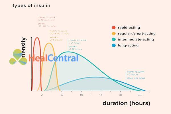 Sự khác biệt giữa thời gian tác dụng của các loại Insulin