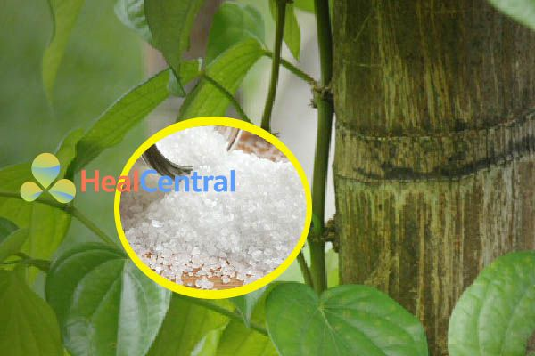 Vệ sinh hậu môn bằng nước muối trước khi dùng lá trầu không