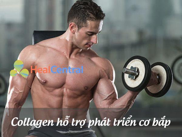 Collagen hỗ trợ tăng cường phát triển cơ bắp