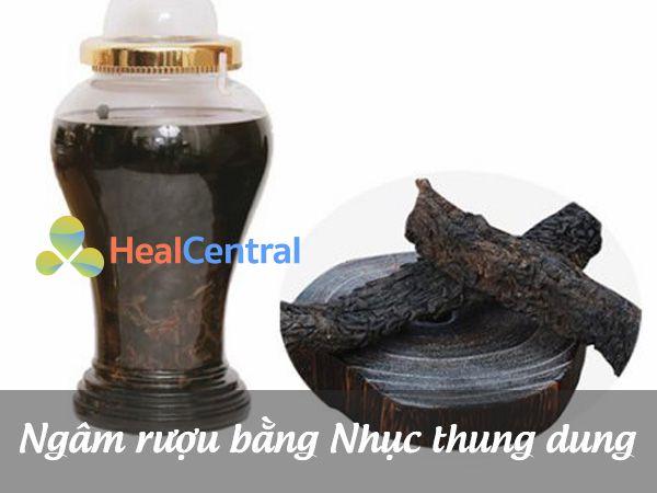 Ngâm rượu từ cây Nhục Thung Dung