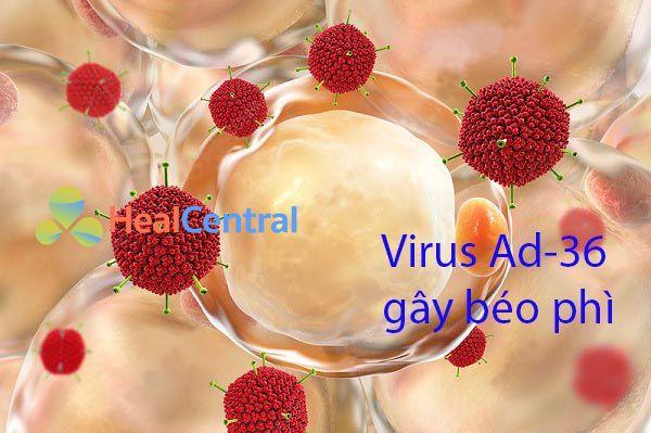 Virus Ad-36 làm gia tăng nguy cơ béo phì