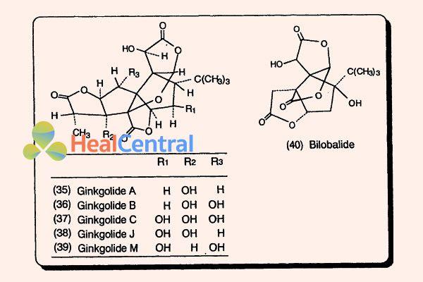 Cấu trúc hóa học của các hợp chất Ginkgolid A, B, C, J, M và bilobalid