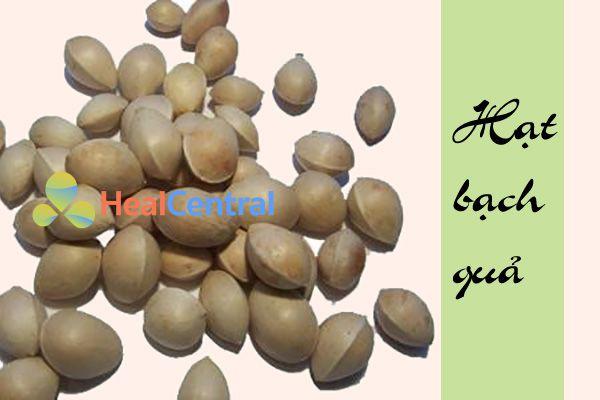 Hạt già của cây bạch quả
