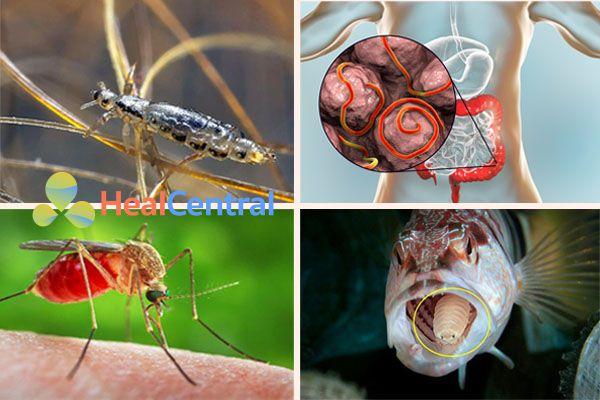 Các loại ký sinh trùng sống ký sinh trên người