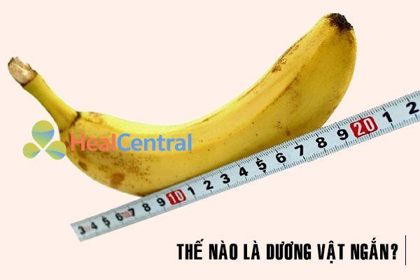 """""""Trái chuối"""" dài bao nhiêu là ngắn?"""