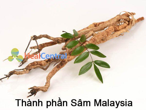 Thành phần Sâm Malaysia của Professor's Pill Keluaran Baru