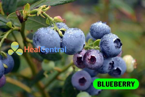 Chiết xuất Blueberry là thành phần chính có trong OTiV