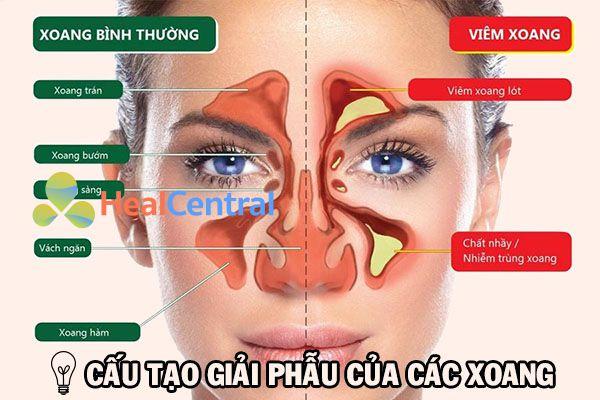 Hệ thống các xoang trên khuôn mặt người