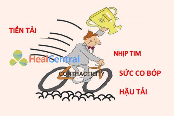 Bốn yếu tố quyết định cung lượng tim, sử dụng một hình tượng tương tự với tốc độ của xe đạp. (Được sao chép từ [6]).