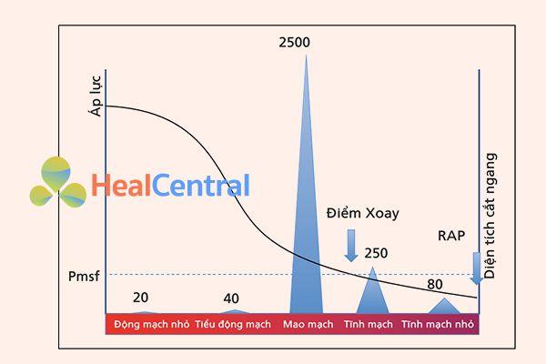Áp lực và diện tích mặt cắt ngang trên hệ thống tim mạch. Pmsf có nghĩa là áp suất làm đầy hệ thống. Đây là áp lực tại tất cả các điểm trong hệ thống tim mạch khi tim ngừng đập (giả định). Trong quá trình lưu thông bình thường, có một điểm (điểm mấu chốt) trong đó áp suất bằng với Pmsf. Tại thời điểm đó, áp lực không phụ thuộc vào dòng chảy và theo lý thuyết cục bộ tại khu vực tĩnh mạch. Sự sụt giảm áp lực chủ yếu liên quan đến sự gia tăng tổng diện tích mặt cắt ngang và compliance của thành mạch máu.
