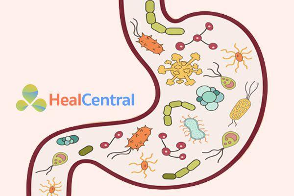 Vi khuẩn Hp rất nguy hiểm