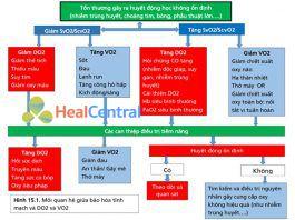 Mối quan hệ giữa bão hòa tĩnh mạch và DO2 và VO2