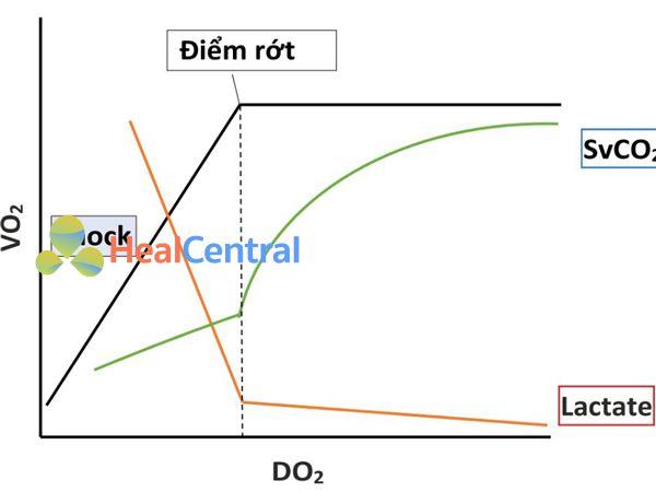 Mối quan hệ giữa việc cung cấp và tiêu thụ oxy.
