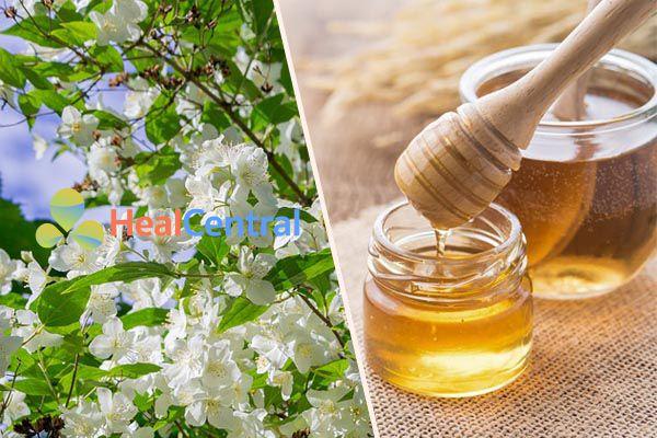 Cách làm trà hoa nhài mật ong