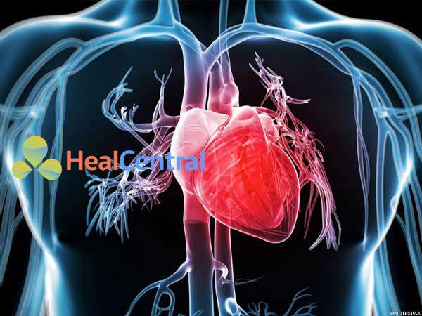 Norepinephrine và hiệu suất tim