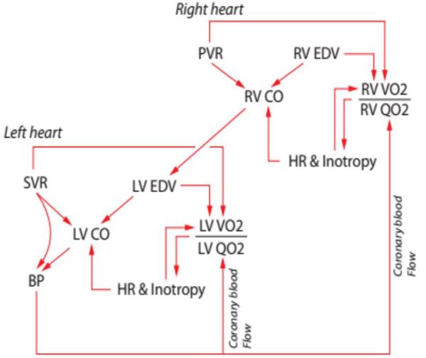 Hình minh họa lý thuyết nhồi máu thất phải trong hội chứng tim phải