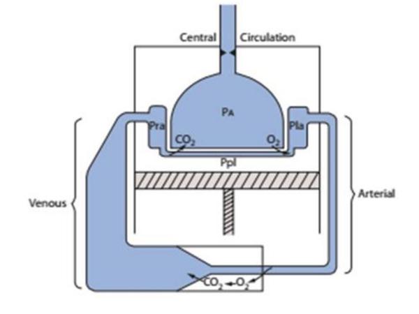 Giản đồ cho thấy tuần hoàn trước đó là bên nhĩ trái trong một hệ thống động mạch có áp lực cao đến mô ngoại biên và trở về hệ thống tĩnh mạch có áp lực thấp, mà cuối cùng là nhĩ phải