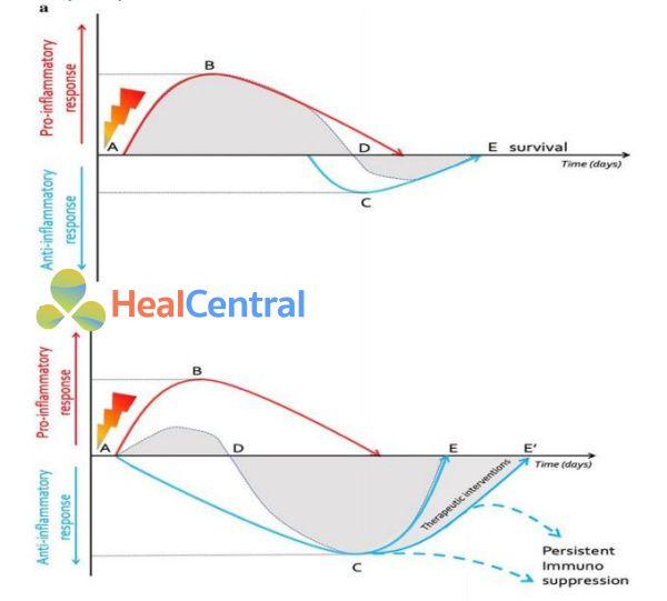 Cân bằng giữa các trung gian tiền viêm và chống viêm