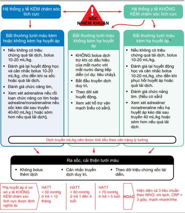 Lưu đồ điều trị truyền dịch và thuốc vận mạch - co cơ tim ở trẻ em