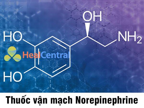 Norepinephrine là thuốc vận mạch hàng đầu để điều trị sốc nhiễm trùng